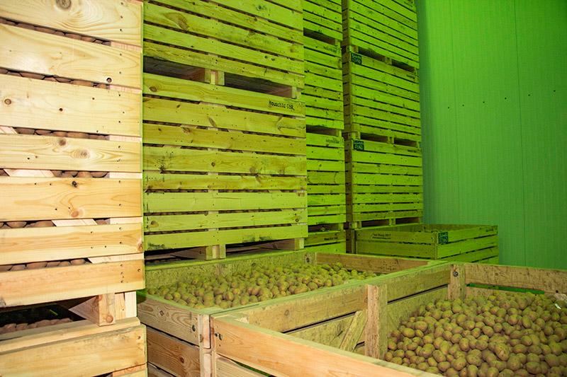Lagerhalle Kartoffeln